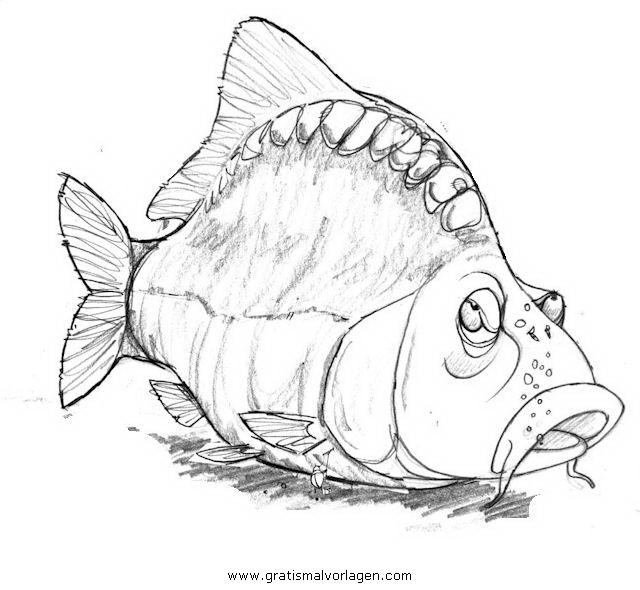 malvorlagen fische karpfen  malvorlagen