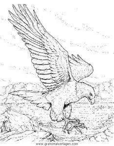 Adler 07 Gratis Malvorlage In Adler Tiere Ausmalen
