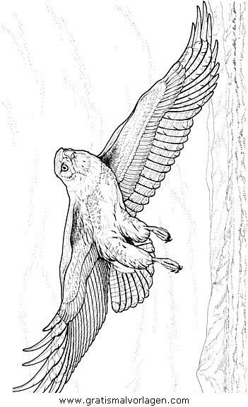 adler 09 gratis Malvorlage in Adler, Tiere - ausmalen