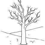 Bäume Malvorlagen Zum Ausmalen Für Kinder