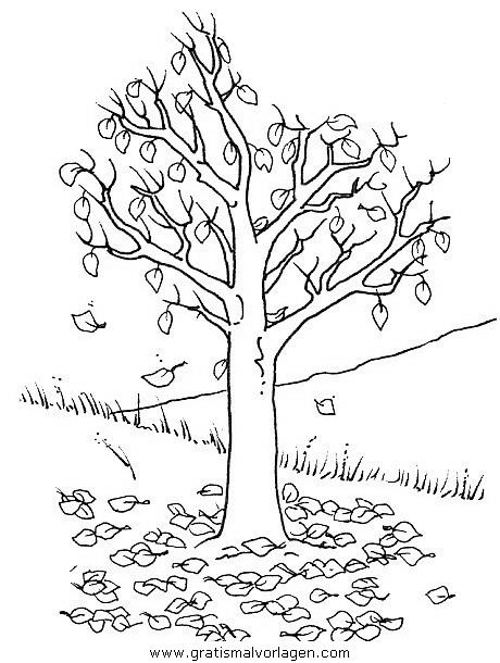 baume 19 gratis malvorlage in bäume natur  ausmalen