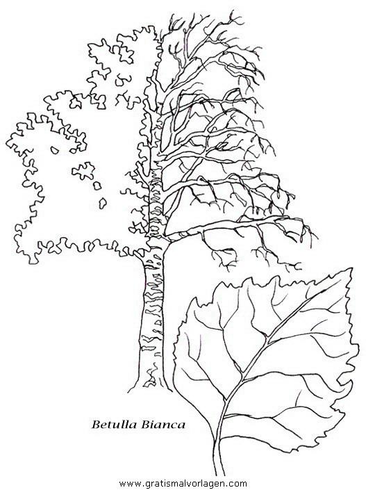 baume 25 gratis malvorlage in bäume natur  ausmalen