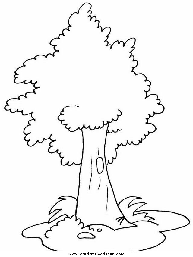 baume 41 gratis malvorlage in bäume natur  ausmalen