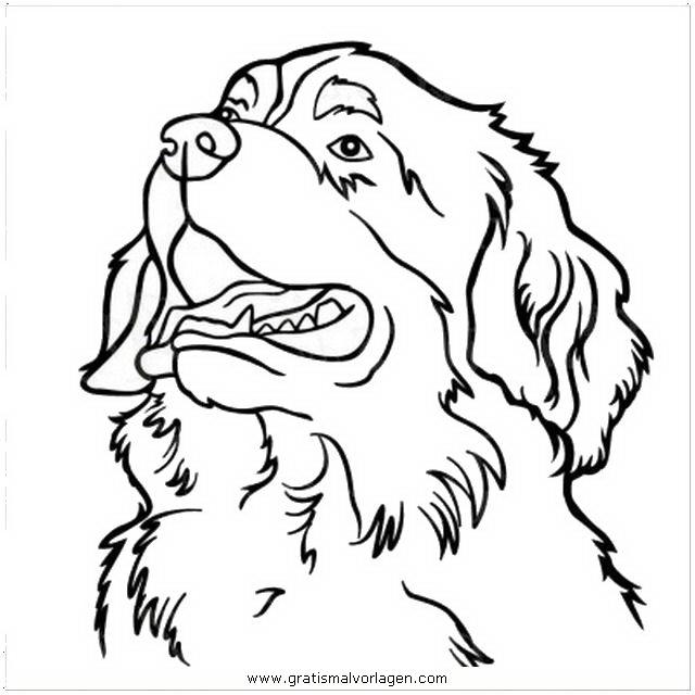 berner sennenhund gratis malvorlage in hunde tiere  ausmalen