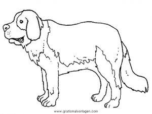 bernhardiner 1 gratis malvorlage in hunde, tiere - ausmalen