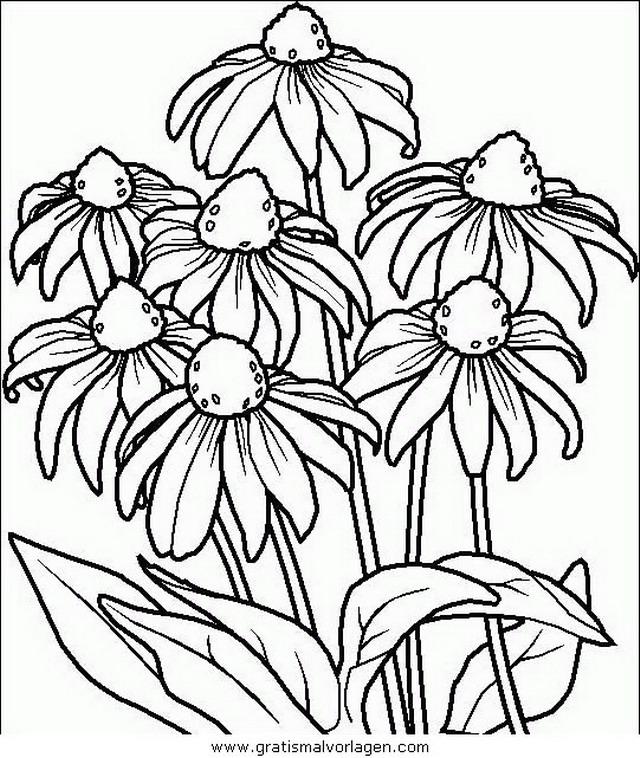 Fantastisch Malvorlagen Sommerblumen Ideen - Malvorlagen-Ideen ...