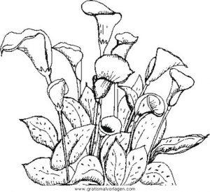 Blumen 420 Gratis Malvorlage In Blumen Natur Ausmalen