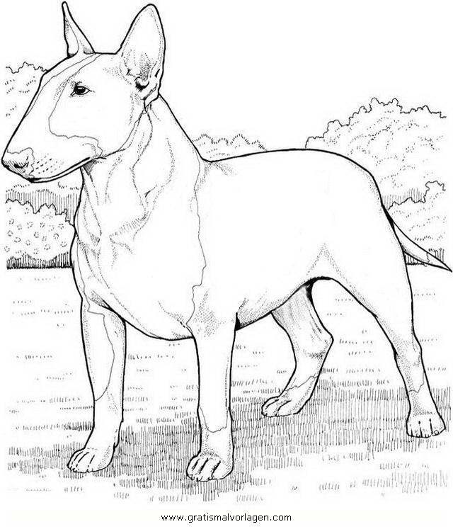 Bullterrier Gratis Malvorlage In Hunde Tiere Ausmalen