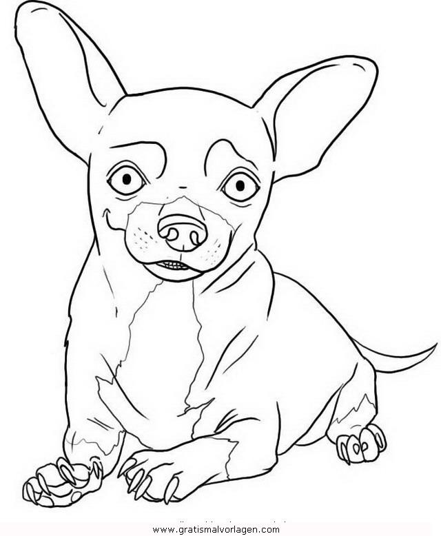 chihuahua 8 gratis malvorlage in hunde tiere  ausmalen