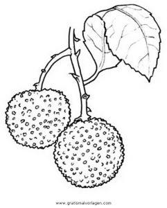 Malvorlage Kräuter Westlicher Erdbeerbaum 1