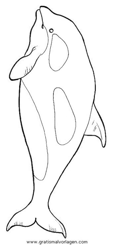 delphine 48 gratis malvorlage in delfine tiere  ausmalen