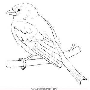eichelhaher buchfink gratis malvorlage in tiere, vögel - ausmalen