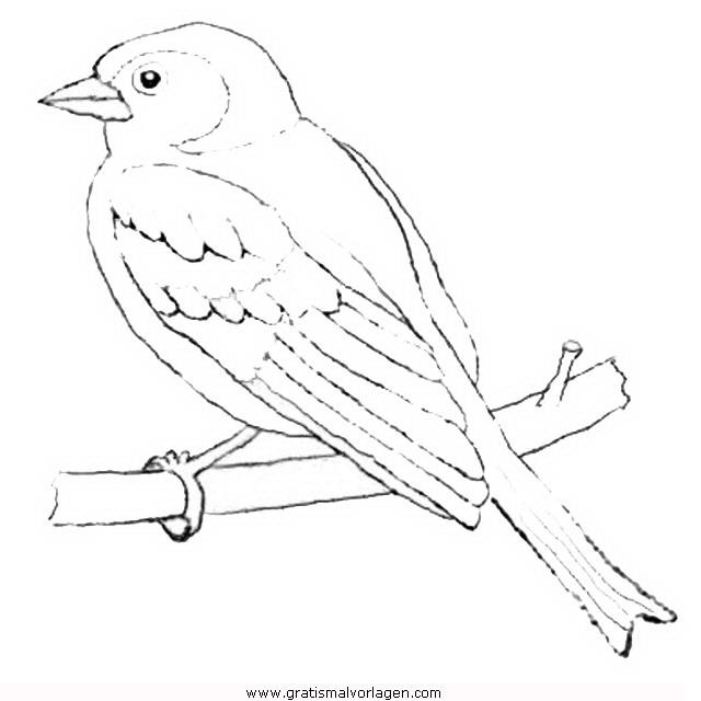 eichelhaher buchfink gratis malvorlage in tiere vögel