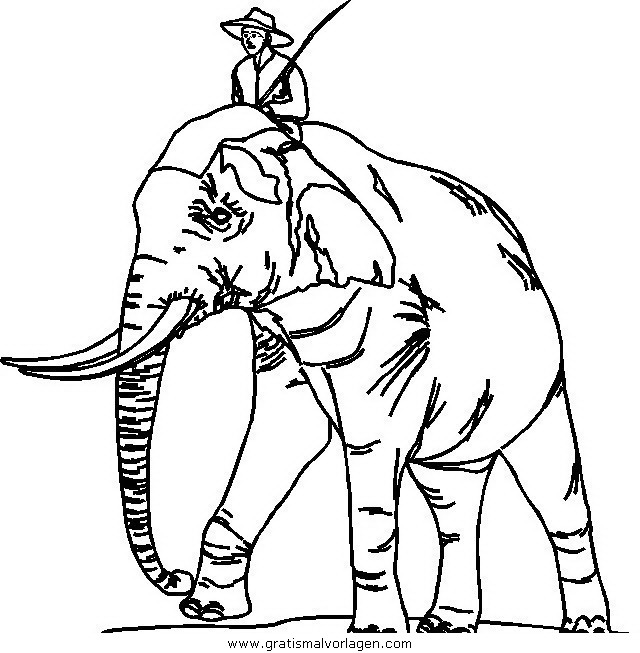 elefanten 51 gratis malvorlage in elefanten tiere  ausmalen