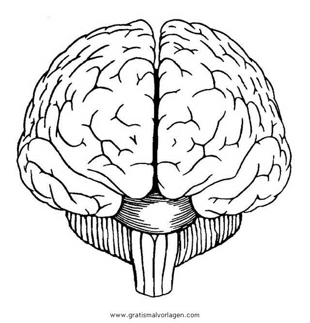 Gehirn 2 Gratis Malvorlage In Diverse Malvorlagen K Rper
