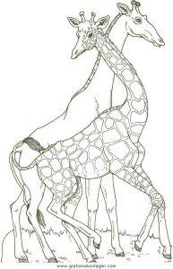 Malvorlage Giraffen giraffen 19