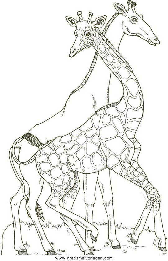 giraffen 19 gratis malvorlage in giraffen, tiere - ausmalen