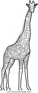 Malvorlage Giraffen giraffen 20