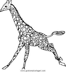 Malvorlage Giraffen giraffen 33