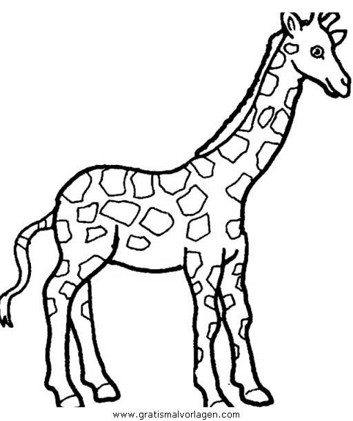 giraffen 36 gratis malvorlage in giraffen, tiere - ausmalen