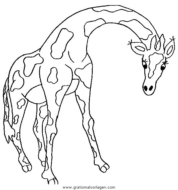 giraffen 42 gratis malvorlage in giraffen, tiere - ausmalen