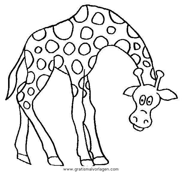 giraffen 44 gratis malvorlage in giraffen, tiere - ausmalen
