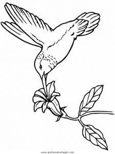 Malvorlage Vögel hummingbird