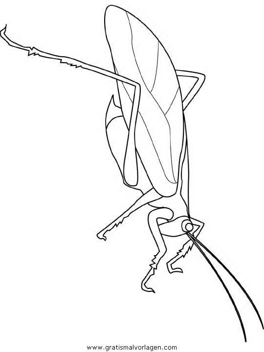 insekten 116 gratis malvorlage in insekten tiere  ausmalen