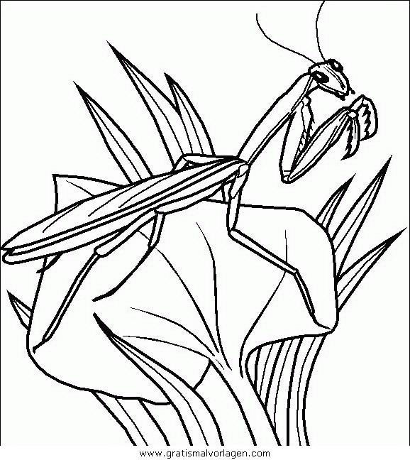 insekten 118 gratis malvorlage in insekten tiere  ausmalen