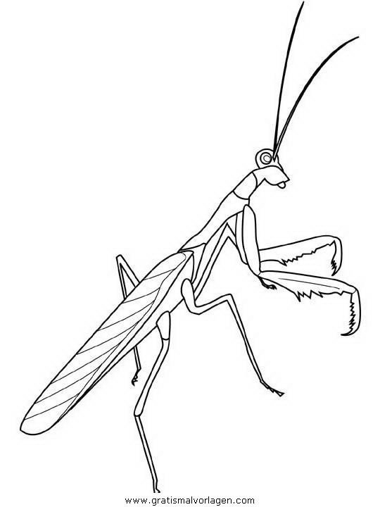 insekten 120 gratis malvorlage in insekten tiere  ausmalen