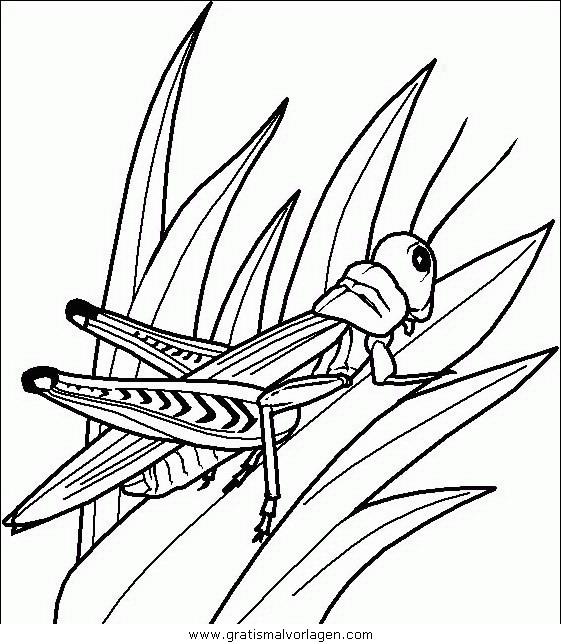 insekten 65 gratis malvorlage in insekten tiere  ausmalen