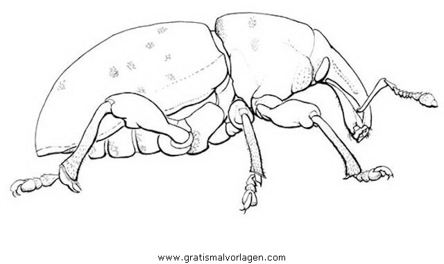 kaefer 3 gratis malvorlage in insekten tiere  ausmalen
