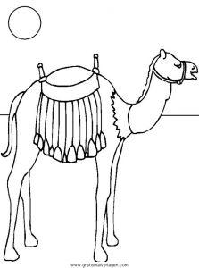 Malvorlage Kamele kamele 07
