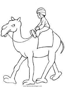 Malvorlage Kamele kamele 12