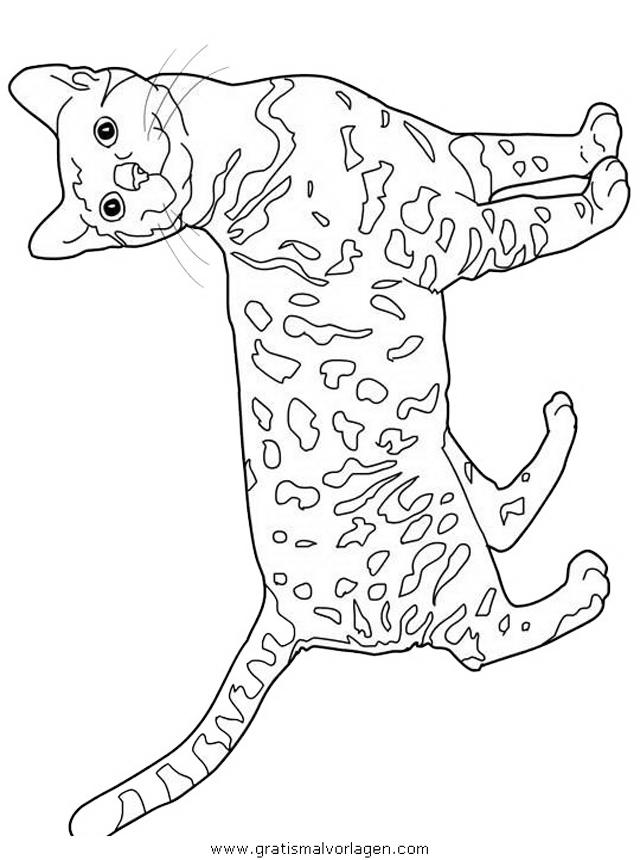 katzen 01 gratis malvorlage in katzen tiere  ausmalen