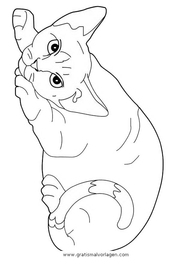 katzen 09 gratis malvorlage in katzen tiere  ausmalen