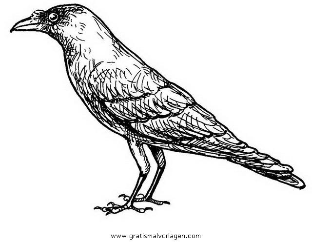 krahe 7 gratis malvorlage in tiere vögel  ausmalen