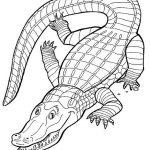 Krokodile Malvorlagen Zum Ausmalen Für Kinder