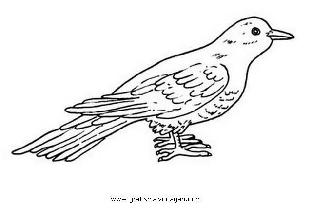 kuckuck gratis malvorlage in tiere vögel  ausmalen