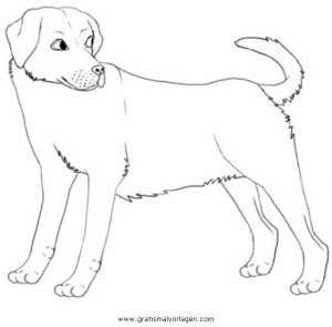 Labrador 3 Gratis Malvorlage In Hunde Tiere Ausmalen