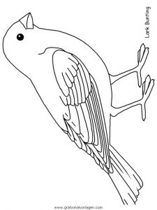 larkbunting gratis malvorlage in tiere, vögel - ausmalen