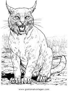 Luchs 16 Gratis Malvorlage In Tiere Tiger Ausmalen