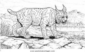Luchs 17 Gratis Malvorlage In Tiere Tiger Ausmalen