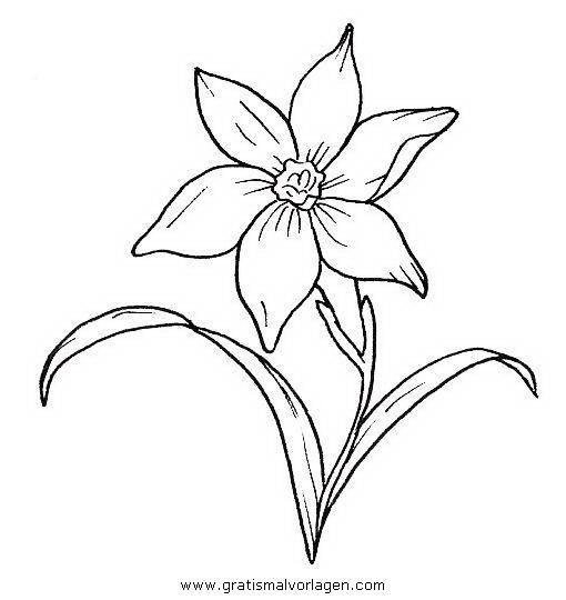 Narzisse Gratis Malvorlage In Blumen Natur Ausmalen