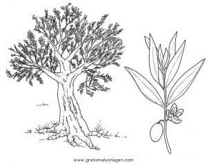 Malvorlage Bäume olivenbaum 2
