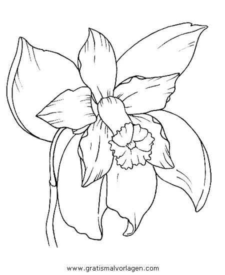 orchidee 0 gratis Malvorlage in Blumen, Natur - ausmalen