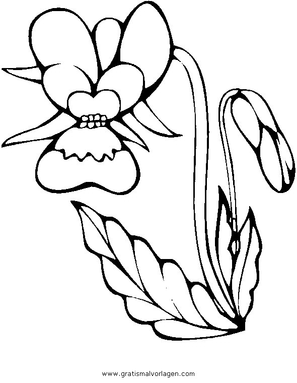 malvorlage orchidee