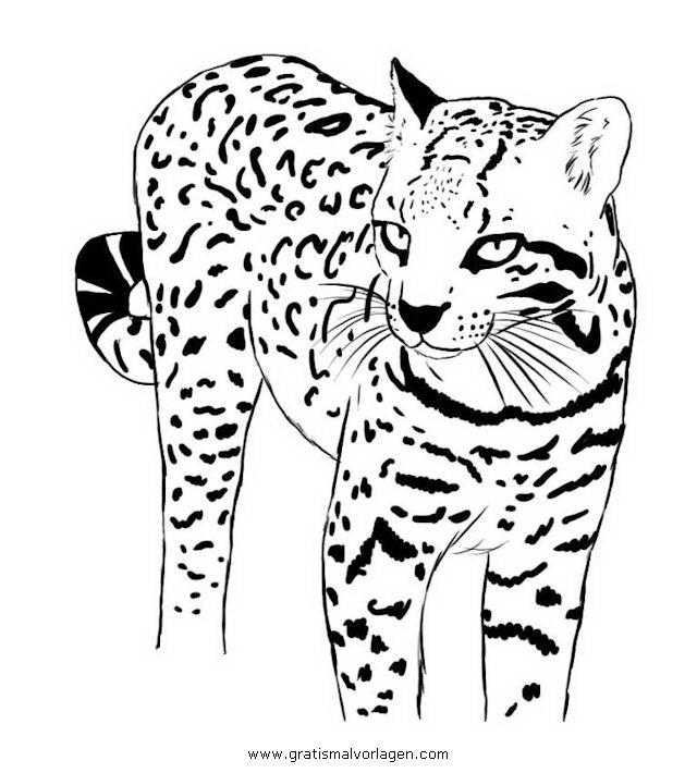 ozelot gratis malvorlage in tiere tiger  ausmalen