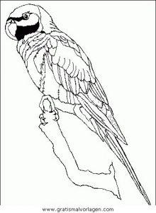 Malvorlage Papageien papageien 04