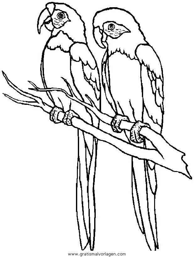 papageien 08 gratis Malvorlage in Papageien, Tiere - ausmalen